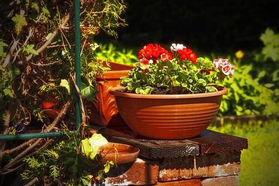 garden flower nature