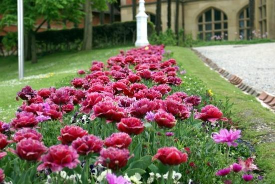 garden flowers spring