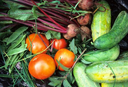 gardening vegetable