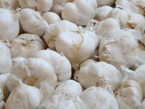garlic allium sativum white