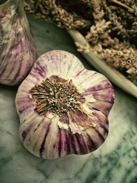 garlic aromatic smell