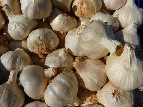 garlic spice sharp