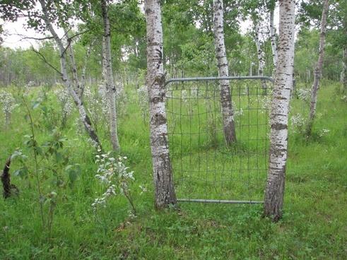 gate in the field 2