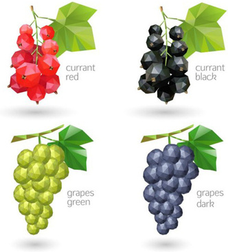 geometric shapes currant and grapes vector