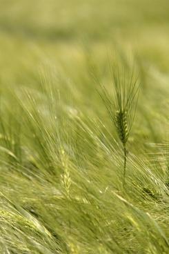 germany farm field