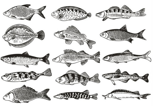 germany fish monochrome illustrations vector
