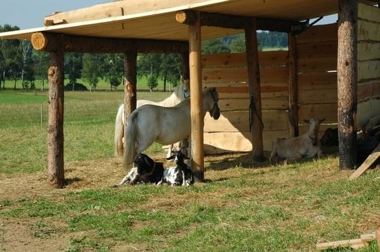 germany stall horses