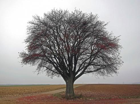 germany tree landscape