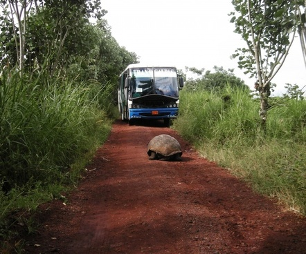 giant tortoise in the road