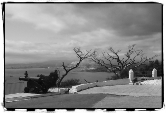 gibraltar black and white cannon
