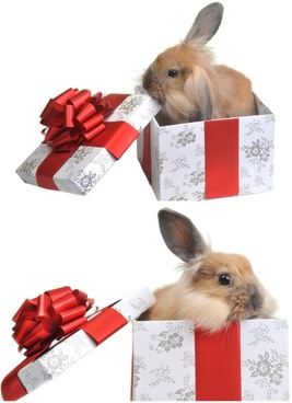 gift rabbit 01 hd pictures