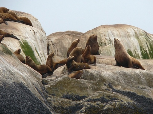 glacier bay alaska steller sea lions