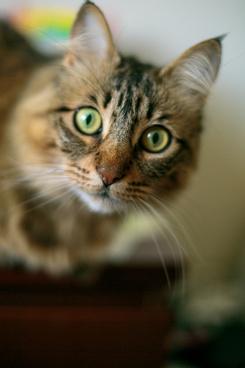 gmorning cat 1