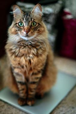 gmorning cat 3