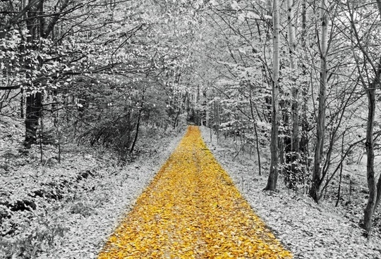 gold footpath walking