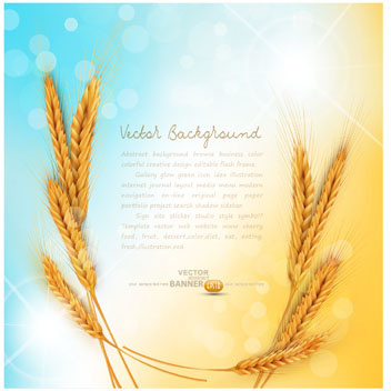 golden wheat background vector set