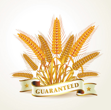 golden wheat creative background vector
