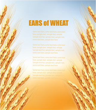 golden wheat vector background graphics