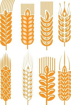 golden wheat wheat vector
