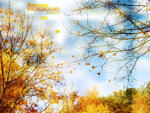golden yellow autumn nature landscape vector
