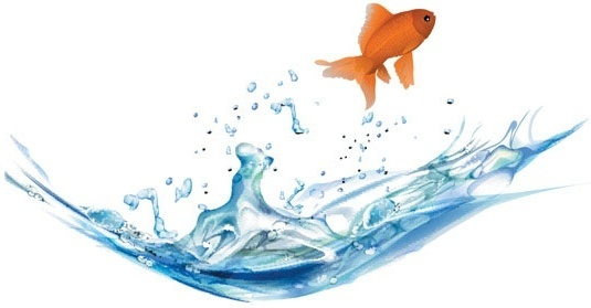 goldfish vector 5