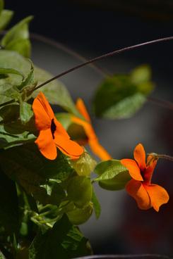gorgeous orange flowers