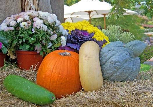gourds and pumpkin
