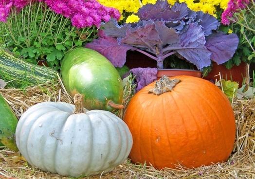gourds pumpkin flowers