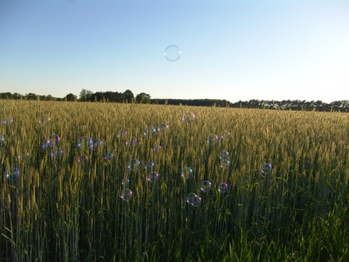 grain cereals nature