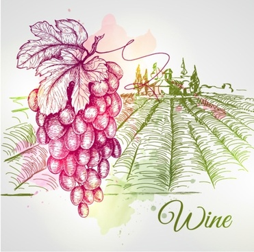 grape and farm hand drawing vector