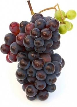 grape hd picture 5