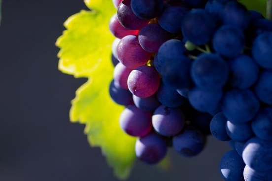 grape hd picture 6