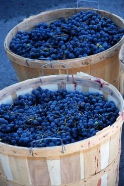 grape hd picture 8