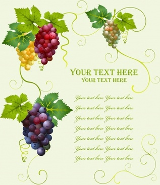grape wine menu background colorful modern design
