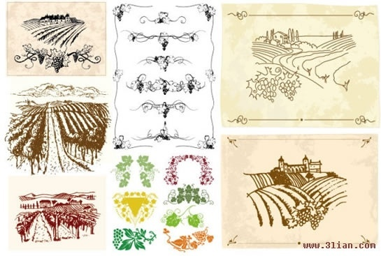 grape farm design elements retro handdrawn sketch