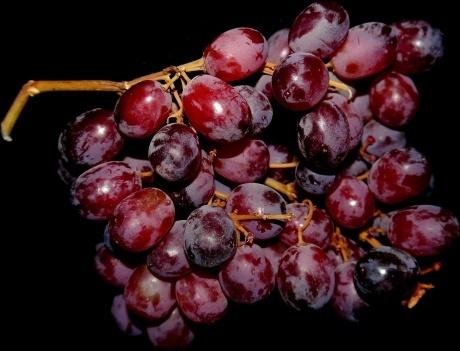 grapes blue fruit