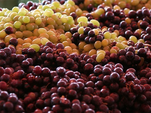grapes white grapes red grapes