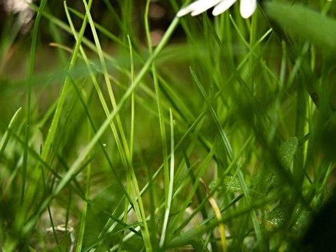 grass a blade of grass blades of grass