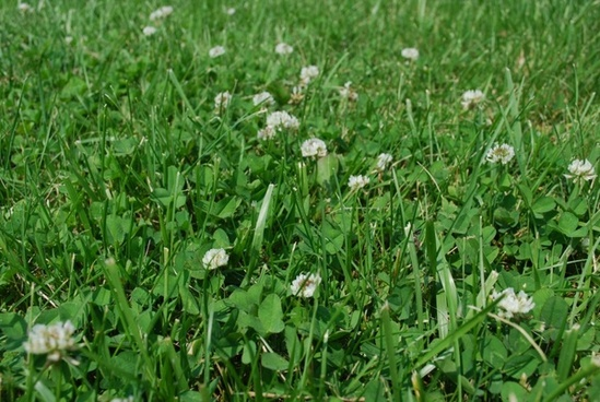 grass and clover