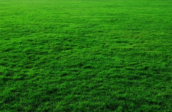 grass background hd sky grass background sky and free stock photos download 23451 free