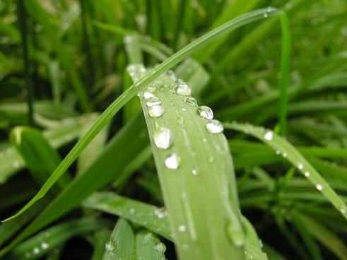 grass grasses nature