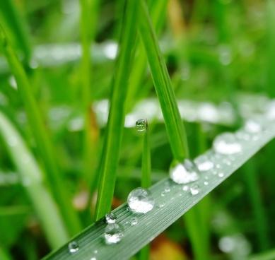 grass green water
