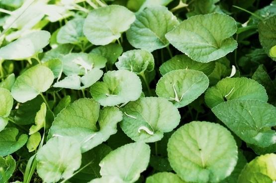 grass herbs green