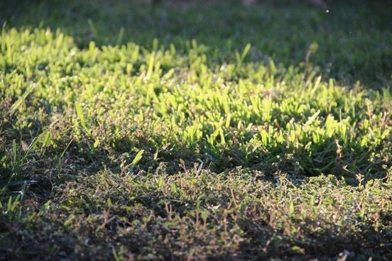 grass in partial sunlight