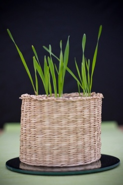 grass in the pot
