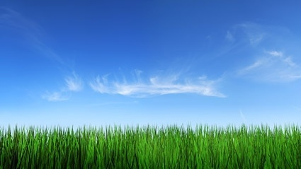 grass sky picture 4