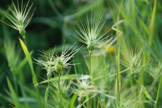 grass weeds background