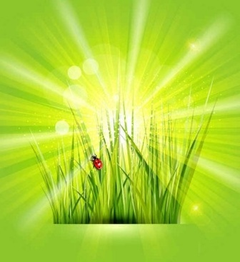 grass with sunlight green background shiny vector
