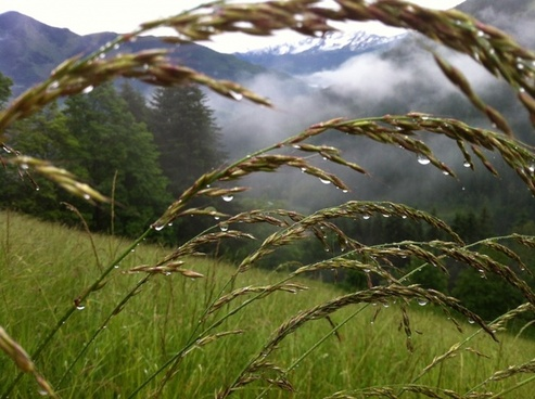 grasses meadow mountain meadow