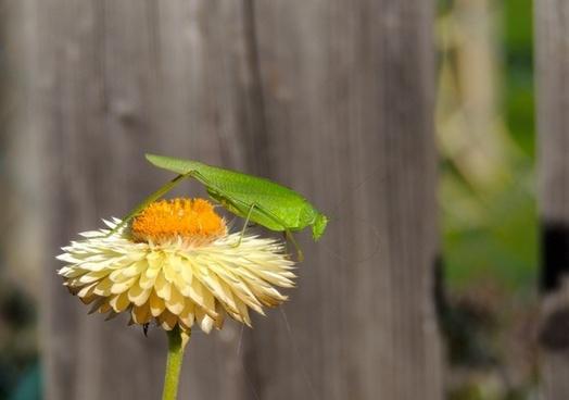 grasshopper green flower